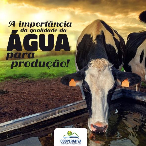 A IMPORTÂNCIA DA ÁGUA PARA VACAS LEITEIRAS
