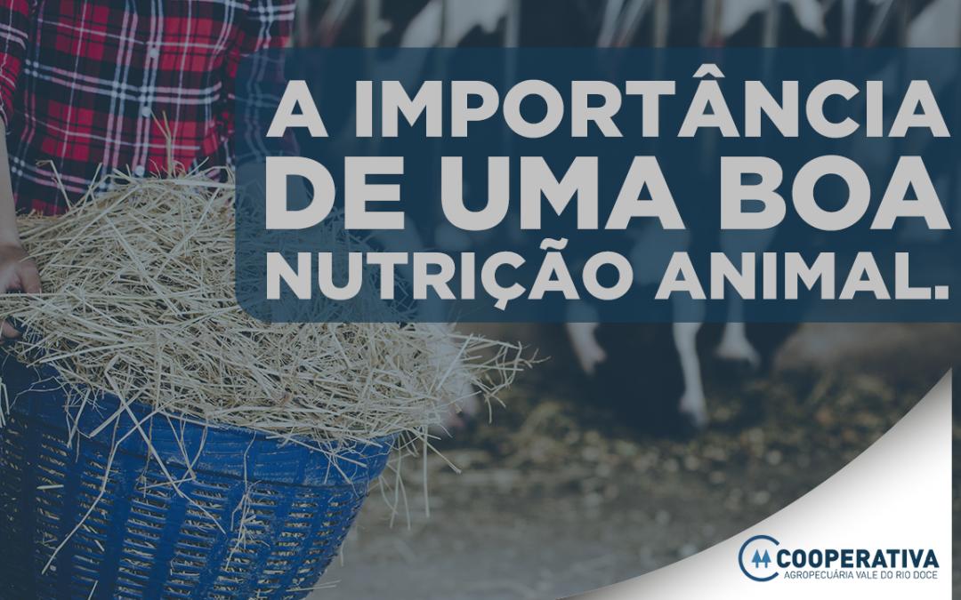 A importância da dieta na produção leiteira